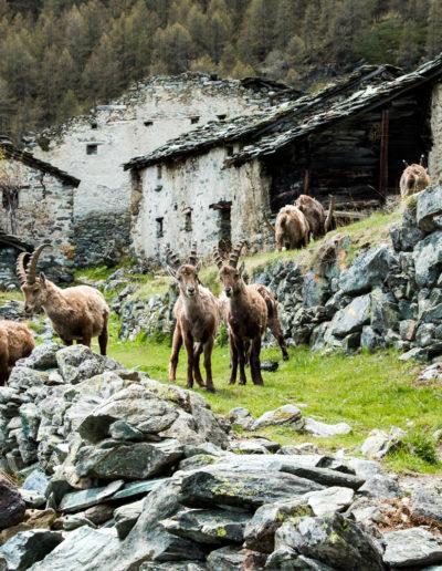 Hotel Meridiana - Valle d'Aosta
